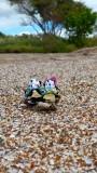 The Pandafords Visit Glass Beach