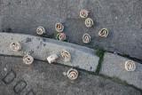 Costco Turkey & Swiss Rollers