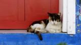 Bodrum Kitty