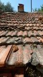 Bodrum Roof