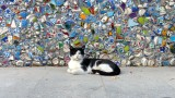 Istanbul Street Cat with Mosaic Tile Wall