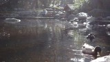 Lithia Park Lower Duck Pond
