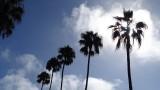 Encinitas Palms