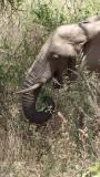 Lake Manyara National Park Elephant
