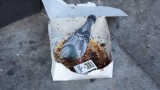 Pigeon in Cake Box with Pack of Cigarettes