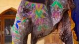 Amer Fort Elephant