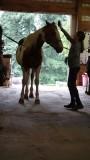 Horse Sense Riding School