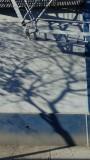 9th Street Tree Shadows