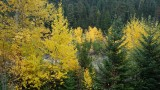 Fall Colors Along the Hood River