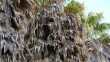 Washington & Hyde Mini Park Palm Trees