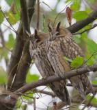 Algemene vogels/Common Birds