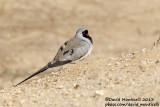 Bird trip to Israel (April 2013)