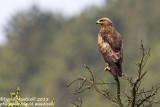 Birds breeding in Europe