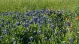 Bayou flowers