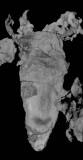 La Voulte coleoid in CT image, underside of the animal