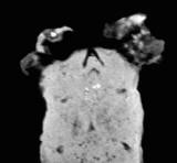 View of beaks in longitudinal section