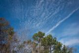 Sky Texture.jpg