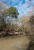 Bayou trees.jpg