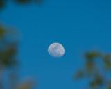 Moon through trees.jpg