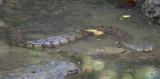 Snake 1.jpg