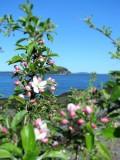 Bar Harbor in  Spring