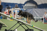 LEAP AKC Agility May 2014