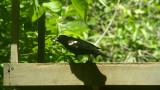 2014_birds