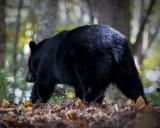 One Big Bear