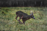 Rut- The Chase Is On