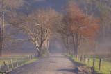 Foggy Sunrise - Early Spring