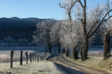 Sunlight Touching the Frost - Cades Cove