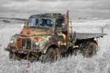 Austin1-ColourPopped.jpg