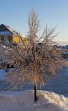 2013 Icestorm