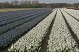 2014 nl;mc0039.jpg