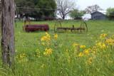texas_wildflowers