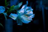 instant_bioluminescence_flowers