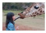 Jessica, giraffe, Kenya