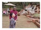 Joseph, giraffe, Kenya