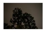Trees, rainy season