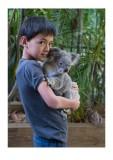 Koala bear, again