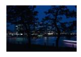 Odaiba lightshow, Japanese trees