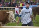 oxen_racing