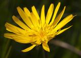 bavarian_flowers