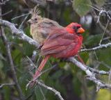 ottawa_birds