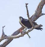 florida_birds