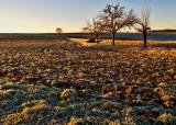 Frosty Morn 2