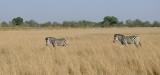 Okanvango Grand angle