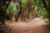 Ellwood Mesa Forest