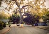 Ojai. Where Cars Give Way to Trees!