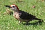 Birds and wildlife from Mexico - Aves y naturaleza de Mexico
